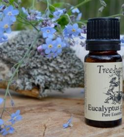 Eeterlik õli Eucalyptus globulus  10 ml