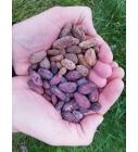 Kakaoubadest süda.jpg